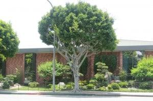 Culver City Julian Dixon Library