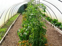 What's a Permaculture? Find Out and Grow