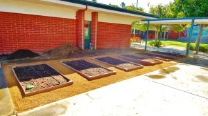 Surprising Garden at La Ballona Elementary