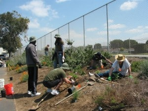 Ballona Creek Renaissance Gets Sony Volunteers