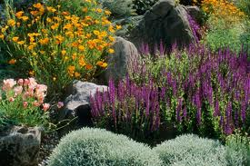 Girl Scout Gold Award Grows Native Plants at CCMS