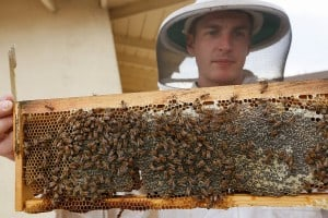 Sierra Club to Host Urban Beekeepers HoneyLove on July 10