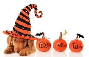 "Adopt & Shop Pronounces It ""Howl-O-Ween"""