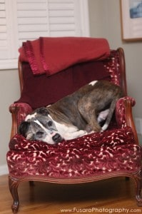 sunny-on-red-chair