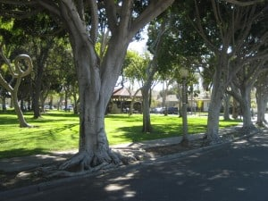 Green Trees for the Golden State Seeks to Increase Urban Forests