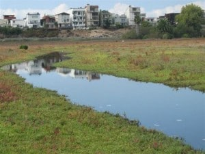 Annenberg Withdraws Funding for Proposed Ballona Wetland Development