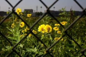 Urban Ag Moves Forward in LA County with AB 551