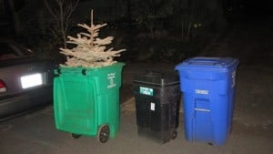Christmas Tree Pick Up – Put it in the Green Bin