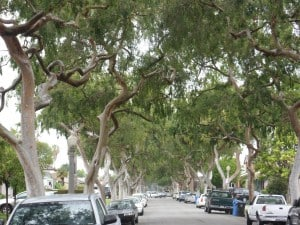 Venue Change for Urban Forest Meeting – Jan. 14
