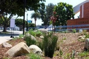 West Basin Opens Water Garden at CCHS