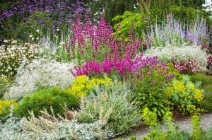 Drought_Resistant_Flowers_and_Plants