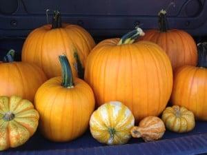 Mr. Bones Pumpkin Patch Comes to Culver City