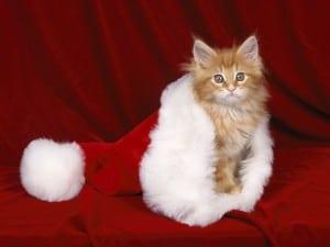 "Adopt & Shop to Host ""Santa Paws"" for Holiday Photos"