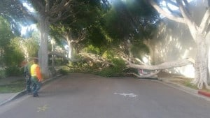Winds Were Up, Trees Are Down (All Over Town)