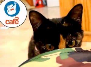 rs_560x415-140305111338-1024-cat-cafe-kittens-jl-030514_copy