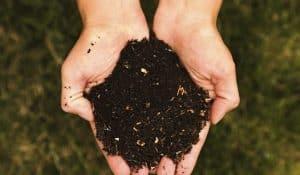 Compost_Dirt_600-600x350