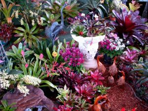 La Ballona Valley Bromeliad Society – May 7