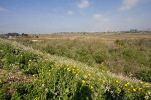 'Walk With A Doc' to Stroll Ballona Wetlands – May 20