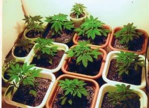 Marijuana Task Force Initial Meeting May 17