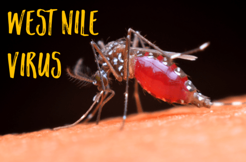 first case of west nile virus for 2018 confirmed culver city