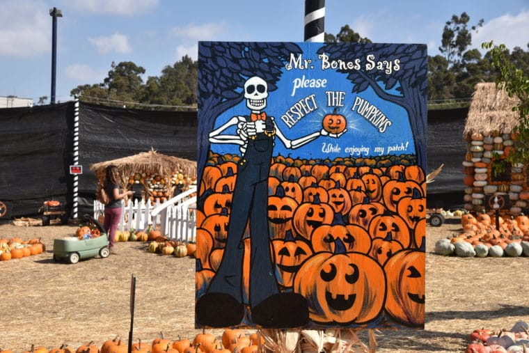 Mr-bones-pumpkin-patch